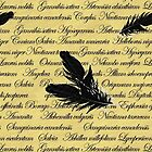 Manuscript with Feathers by artsandherbs