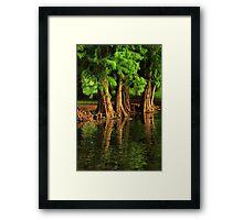 Under The Everglades Framed Print