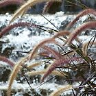 Grasses by PhotosByG