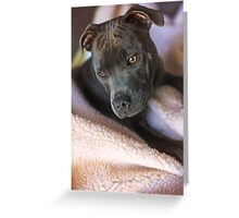 Pure Blue Staffy Greeting Card