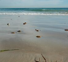 Silver Sands Seaweed by catdot