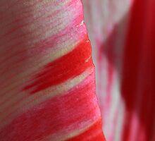 Strawberries and Cream by sarah ward