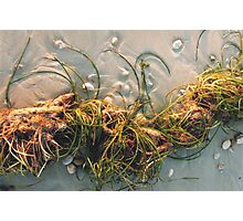 Seagrass and Seaweed Photographic Print