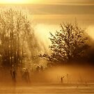 16.2.2015: Winter Morning Magic III by Petri Volanen