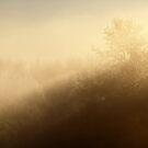 16.2.2015: In the Mist by Petri Volanen
