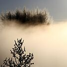 16.2.2015: Trees in the Fog by Petri Volanen
