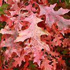 Red Oak Leaves by mrbpaints
