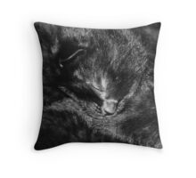 Kitten Sleep Throw Pillow