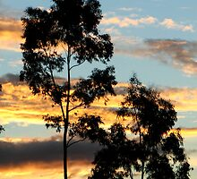 Sunset over Oxenford by Kathie Nichols