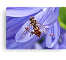 Hoverfly on Agapanthus Canvas Print