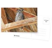Great Horned Owl - 2869 Postcards