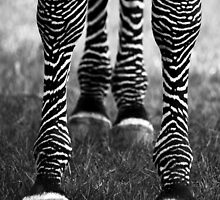 Zeb Legs by hfaulkner