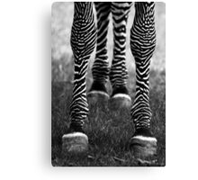 Zeb Legs Canvas Print