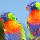 Pair of Rainbow Lorikeets  by Carole-Anne
