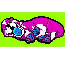 Sleepy Puppy Shocking Pink and Blue Photographic Print