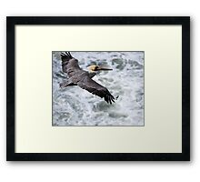 Soaring Above The Seas.... Framed Print