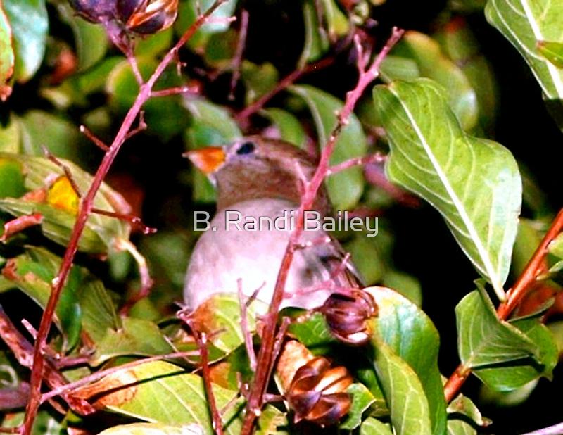 Hiding bird by ♥⊱ B. Randi Bailey