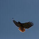 R.T. Hawk by cfam