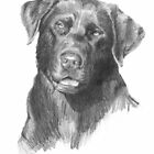 Chocolate lab drawing by Mike Theuer