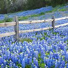 Spring Bluebonnets in the Hill Country by RobGreebonPhoto