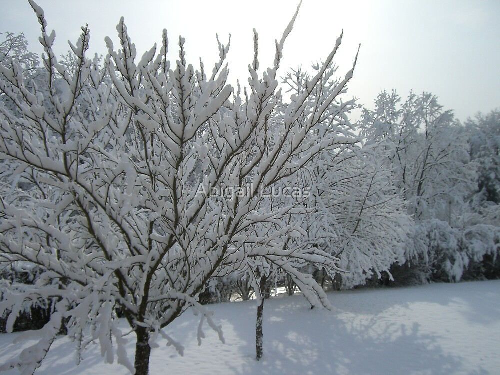 Snowy Trees by Abi Skeates