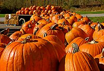 The Great Pumpkins by Ray4cam