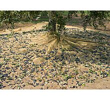 Harvest of olives Photographic Print