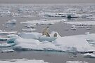 Going With The Floe! by Steve Bulford