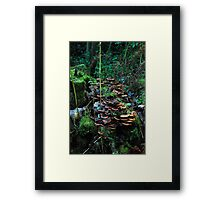 Fungliside in the valley of seven bridges Framed Print