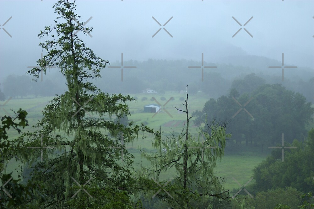 Misty Morning by Lisa G. Putman