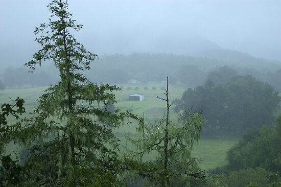 Misty Morning by Lisa G. Putman
