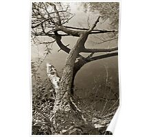 Fallen Tree, Epping Forest, UK Poster
