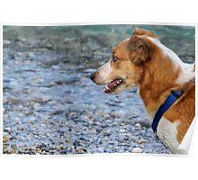 dog at lake Poster