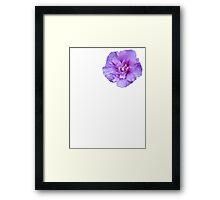 Purple hibiscus flower Framed Print