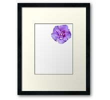 Purple hibiscus flower Framed Print