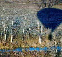 I'm Being Followed by a Balloon Shadow by Jeannette Sheehy