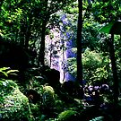 Manoa Falls Trail by kevin smith  skystudiohawaii