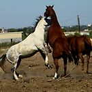 Dancing Horses by R&PChristianDesign &Photography