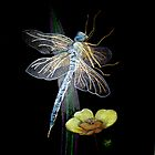 Dragonfly by Diane Giusa