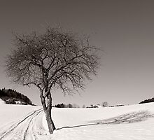 Winter Impressions - afternoon sun light by Evelyn Laeschke