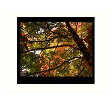 Autumnal Dazzle Art Print