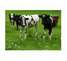 Cows amongst the wildflowers Art Print