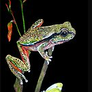 Frog by Diane Giusa
