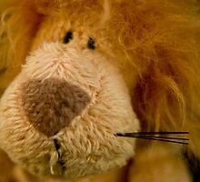 Lion by Rachel Ward