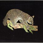 possum by Diane Giusa