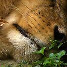 He Sleeps by Lisa G. Putman