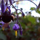 Blooming Rain Drops by Maureen Kay