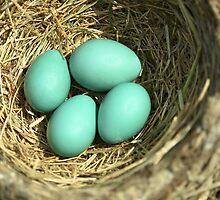 Robin Eggs by imarkimages