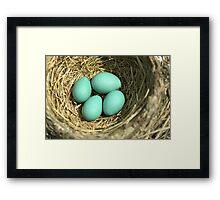 Robin Eggs Framed Print