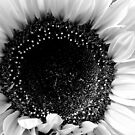 Sunflower by Maureen Kay